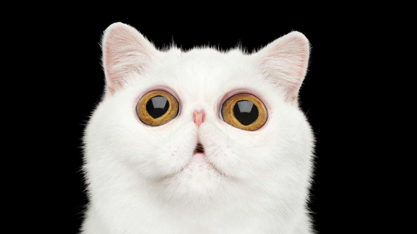 Cat with big hypnotic eyes